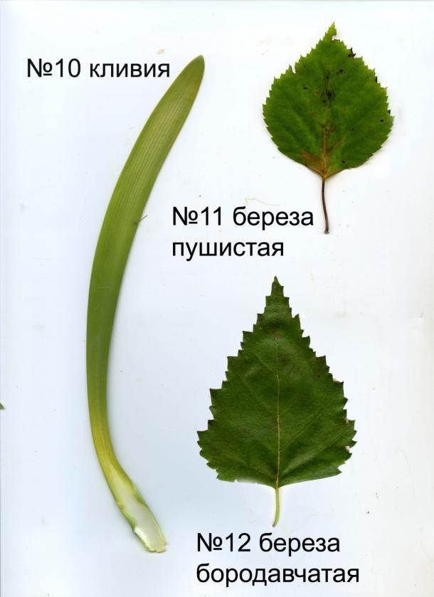 page4915-listya_10-12.jpg