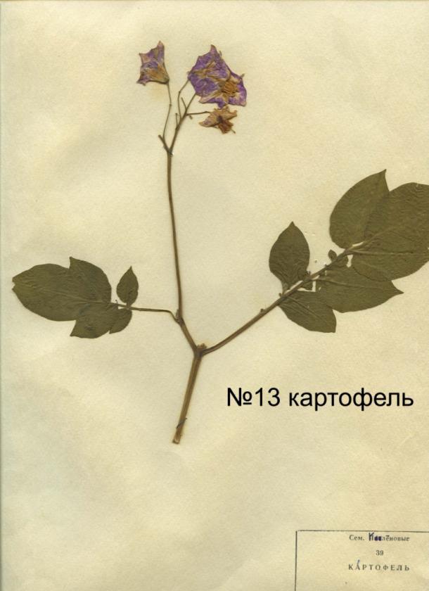 page4915-listya_13.jpg
