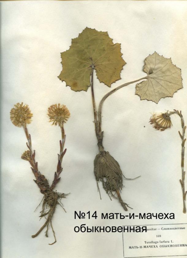 page4915-listya_14.jpg