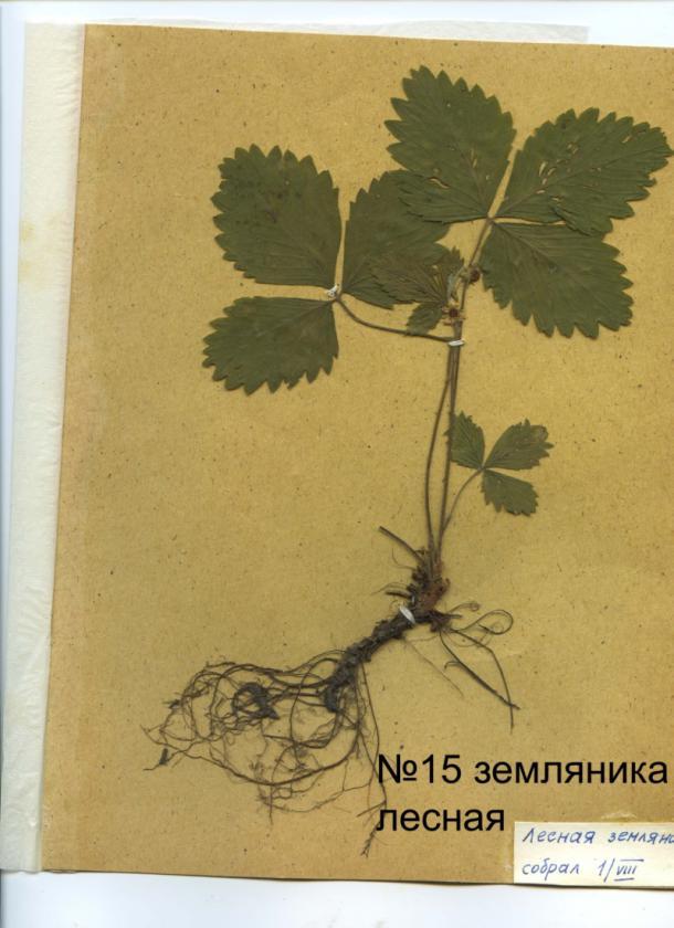 page4915-listya_15.jpg