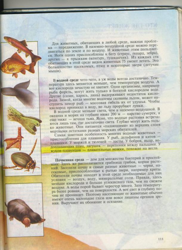 page8636-img016m.jpg